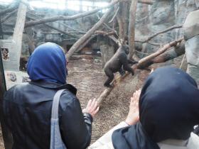 HM-MTW_Zoo-2Affe
